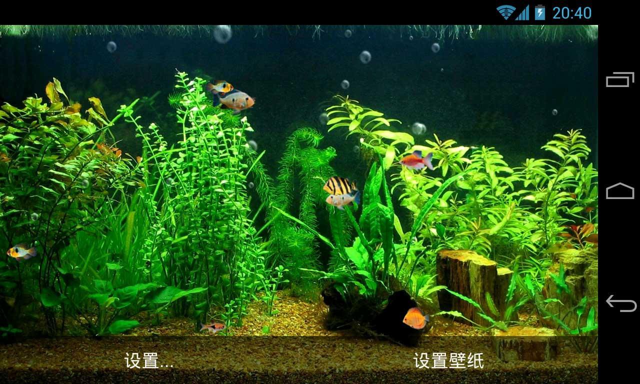 hd aquarium live wallpaper realistic fish animation and bubble effect 1280x768