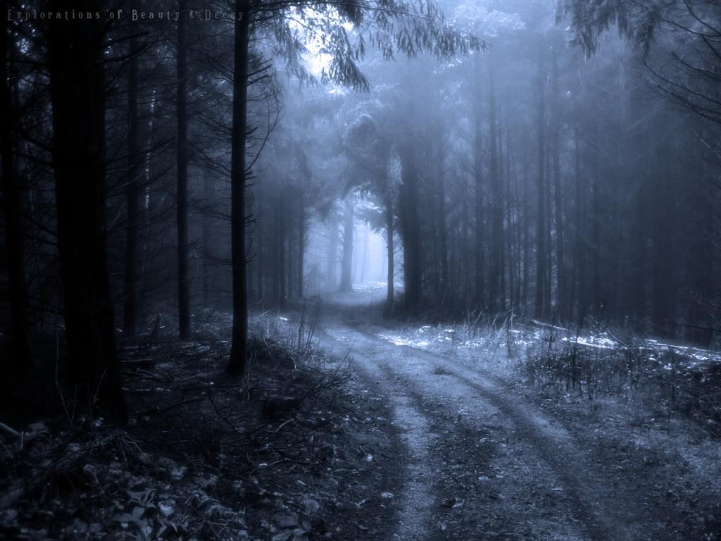 Dark Forest Backgrounds Wallpaper Wallpaper Hd X