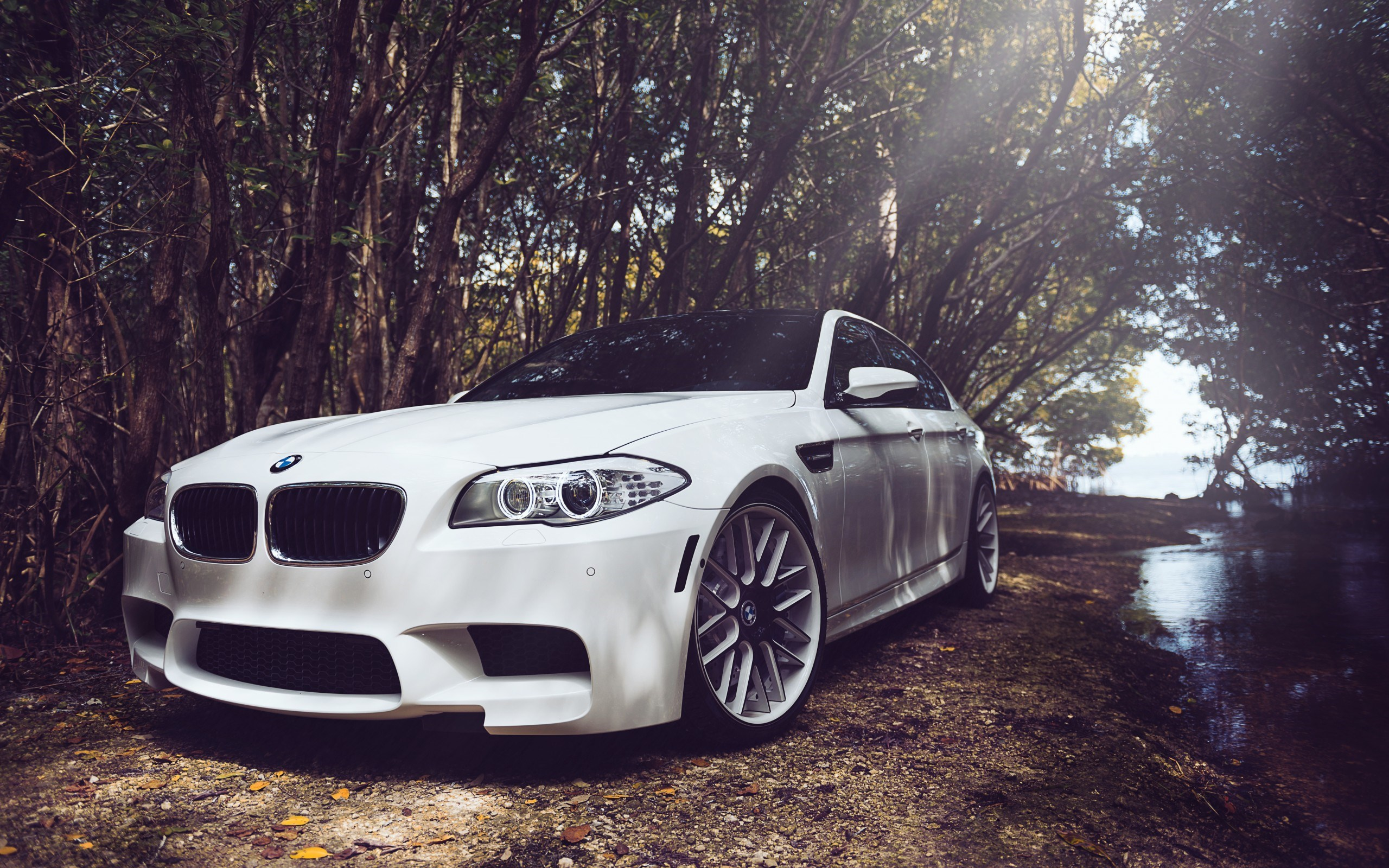 bmw m5 f10 2013 forest trees auto picture white car hd wallpaper 2560x1600