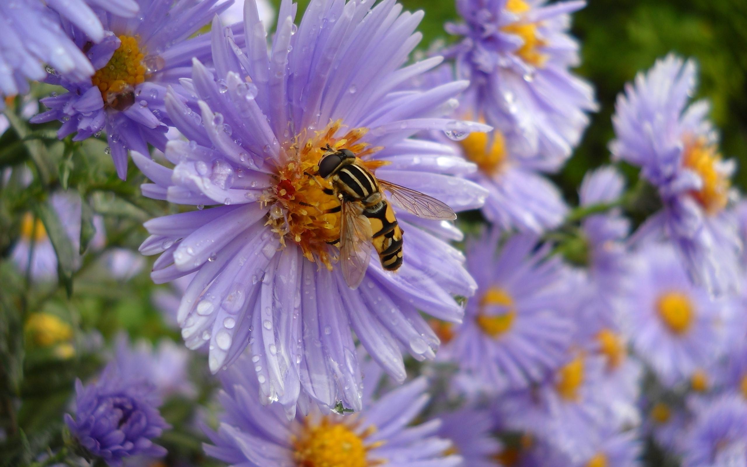 Bee wallpaper 29373 2560x1600