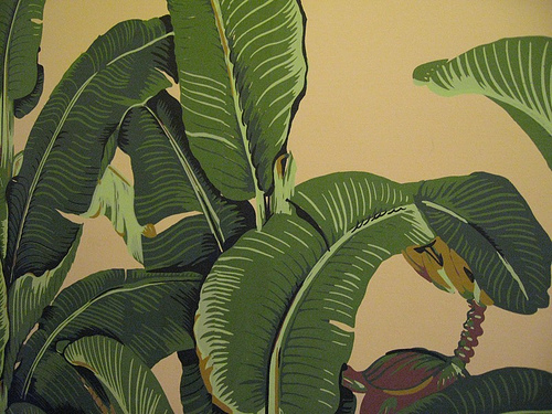 Banana Leaves Wallpaper Flickr   Photo Sharing 500x375