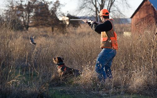 Bird Hunting Backgrounds 3682540335 a6d241baa7jpg 500x313