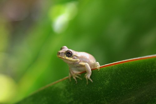 Cute Baby Frog Pictures Little baby cute frog 500x333