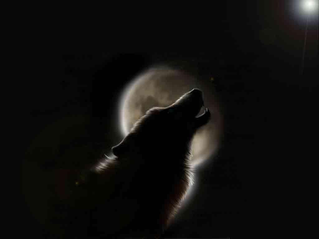 Wallpapers   Black Werewolf wallpaper 1024x768