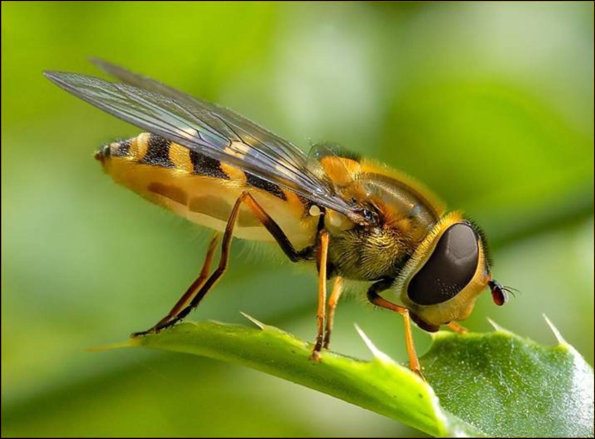 Bee Wallpaper 1215x897