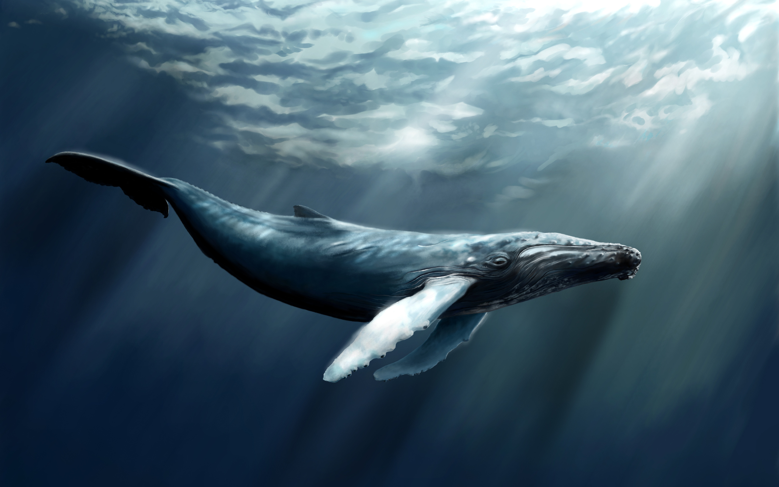 Whale Computer Wallpapers Desktop Backgrounds 2560x1600 ID412635 2560x1600