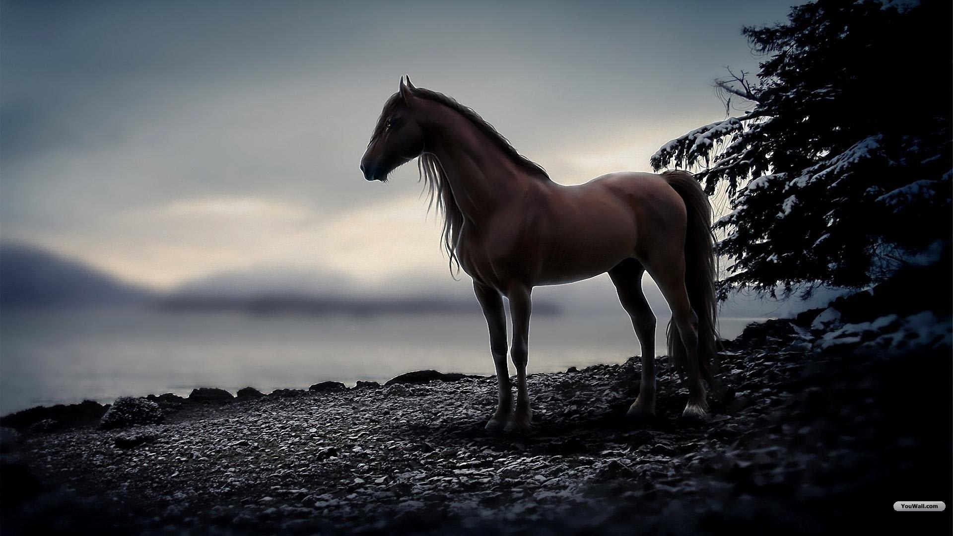 horse desktop wallpaper 1920x1080
