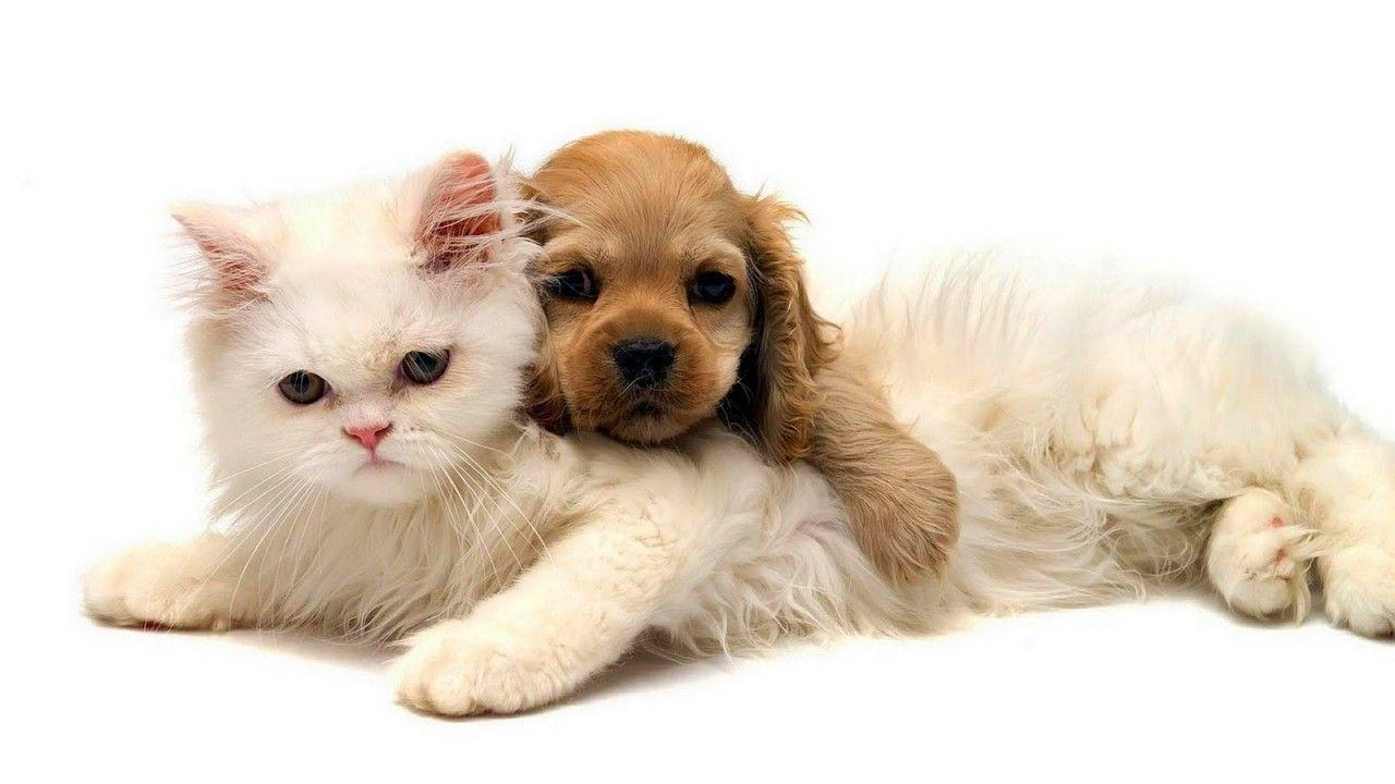Cat And Dog Wallpapers 1280x720