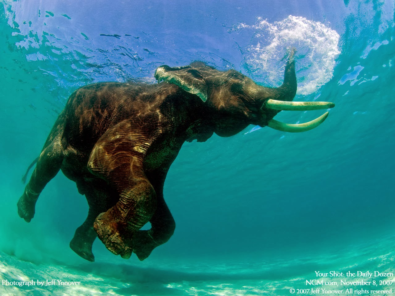 HD Underwater Wallpaper