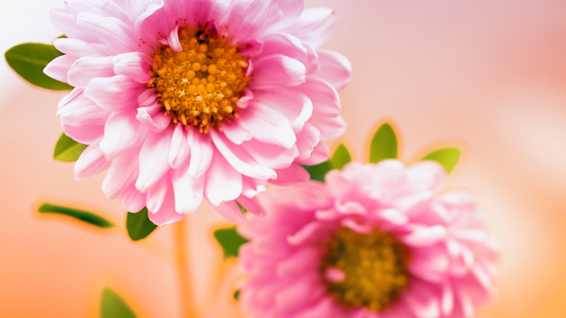 Pink Floral Wallpapers HD Wallpapers 1920x1080