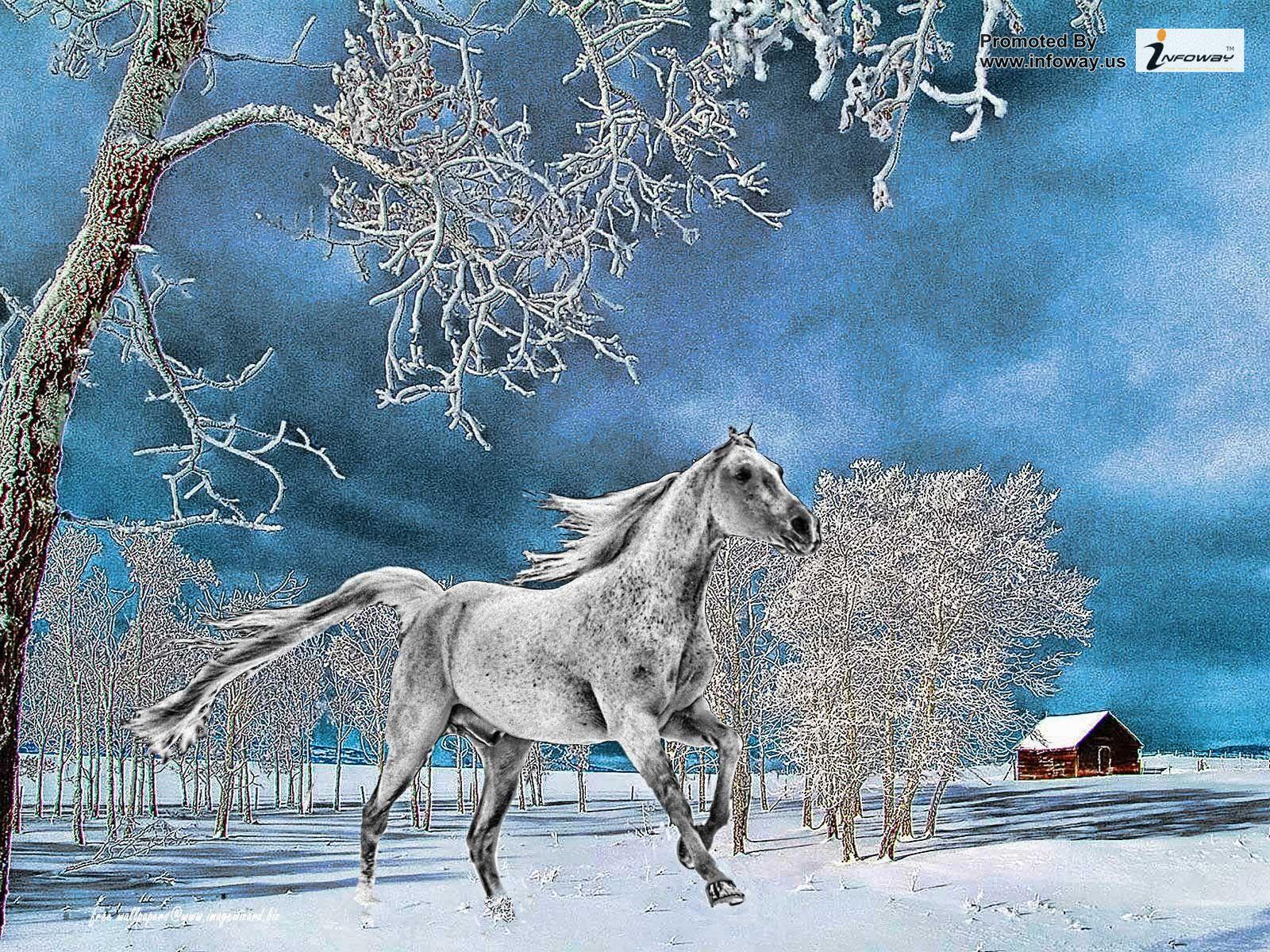 43+ Animal Winter Wallpaper on WallpaperSafari