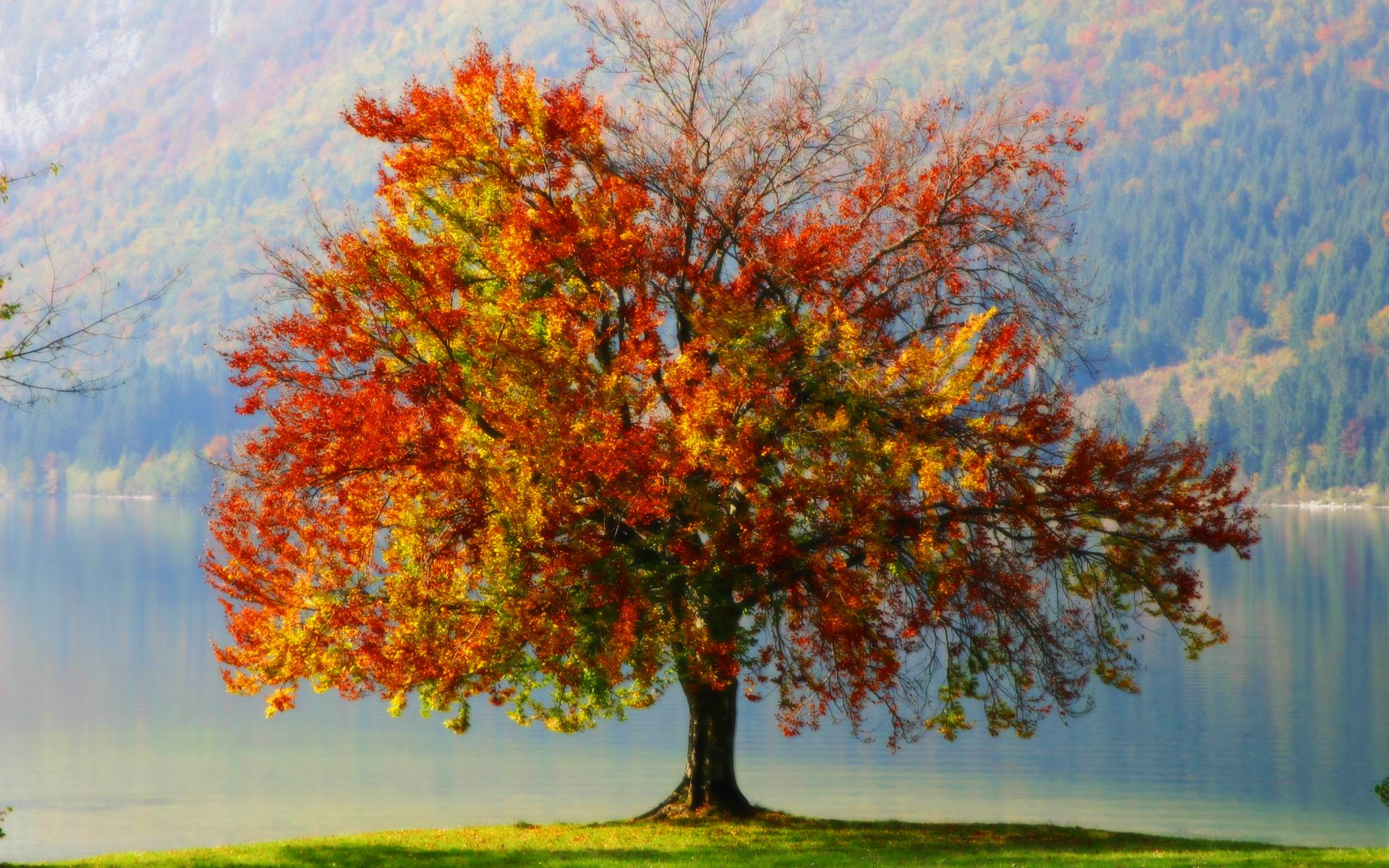 Autumn tree wallpaper wallpapersafari for Arboles de jardin de hoja caduca