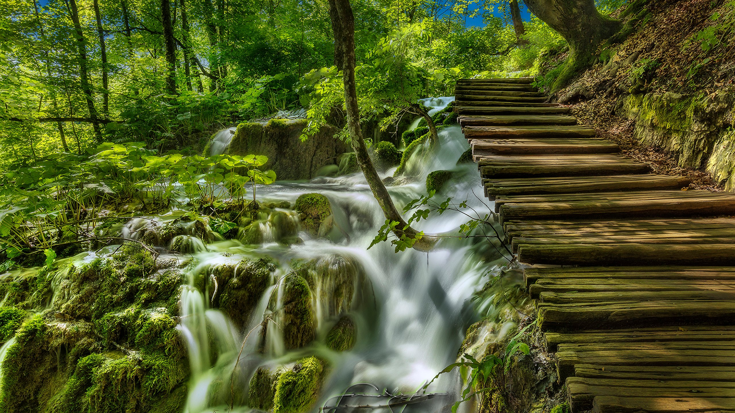 Photo Croatia Plitvice Lakes National Park Nature Bridges 2560x1440 2560x1440