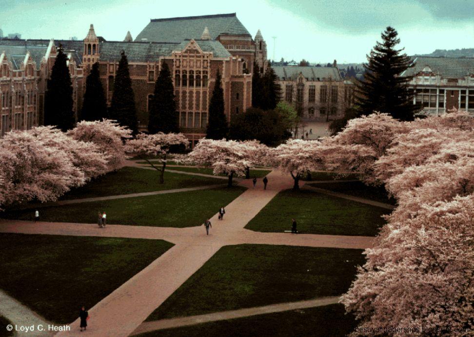 University Of Washington Desktop Background university of washington 972x691
