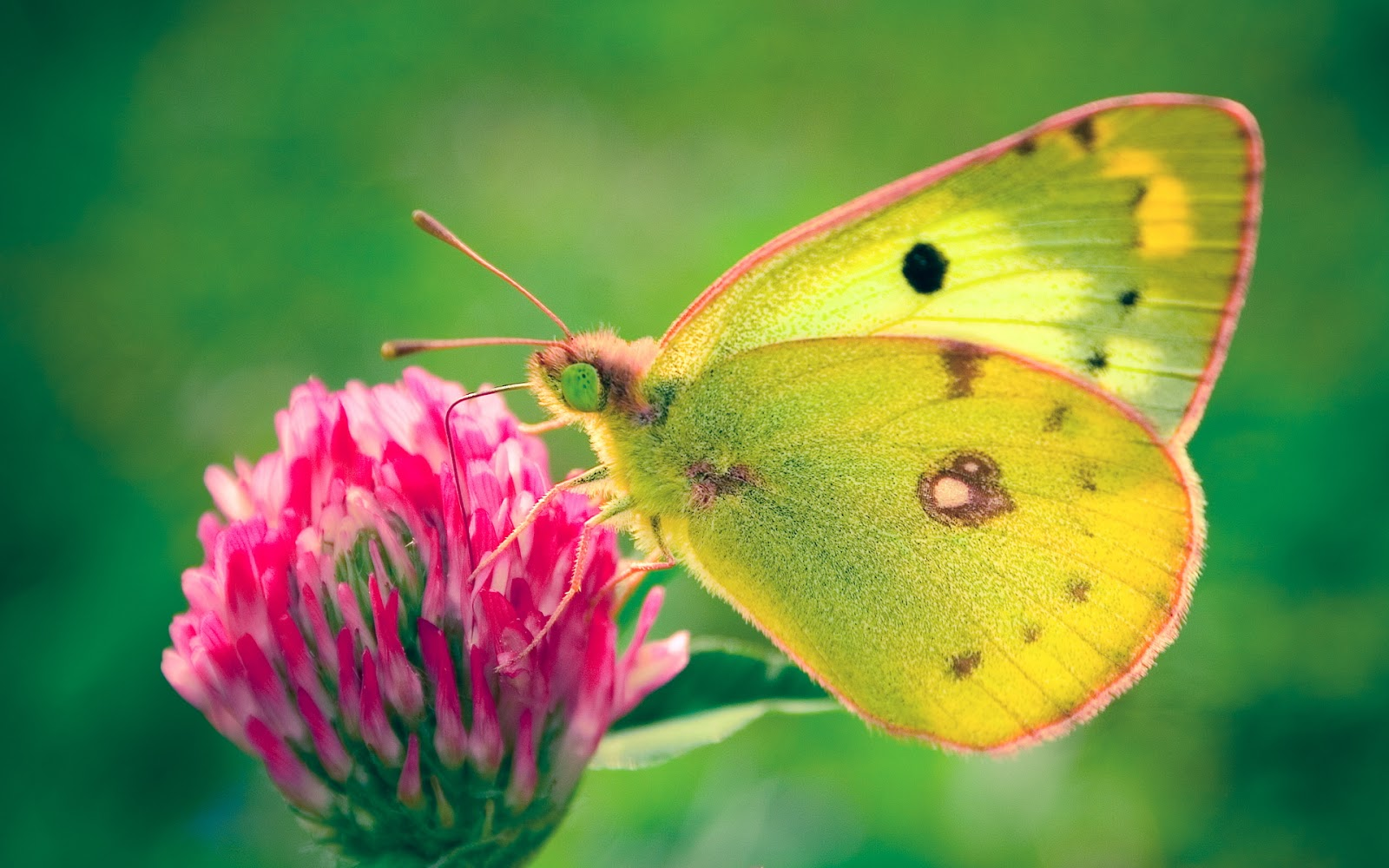 Beautiful HD Butterfly wallpapers New Wallpapers HD 1080i 1600x1000