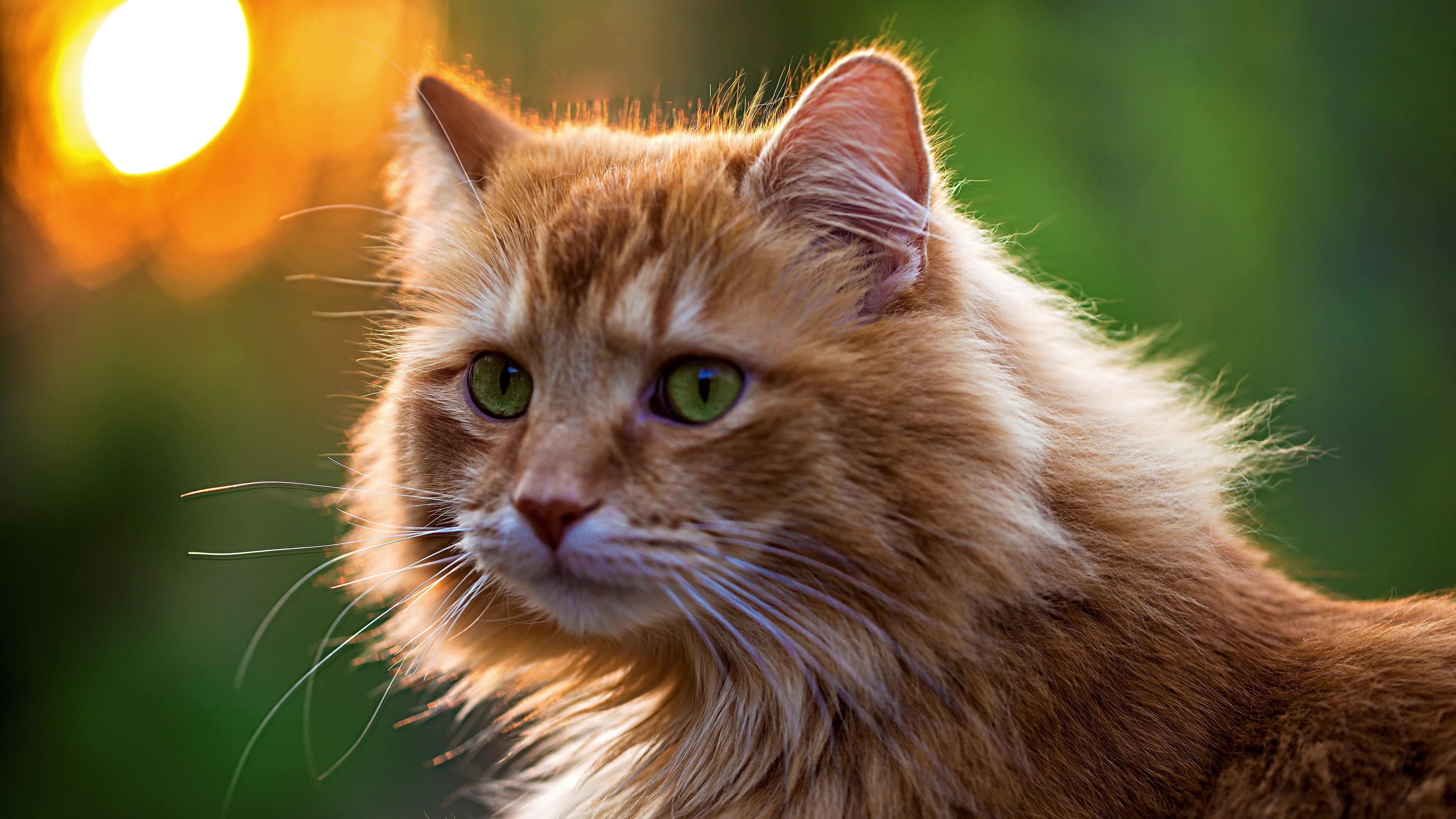 4K Kittens Wallpapers High Quality Download 3840x2160