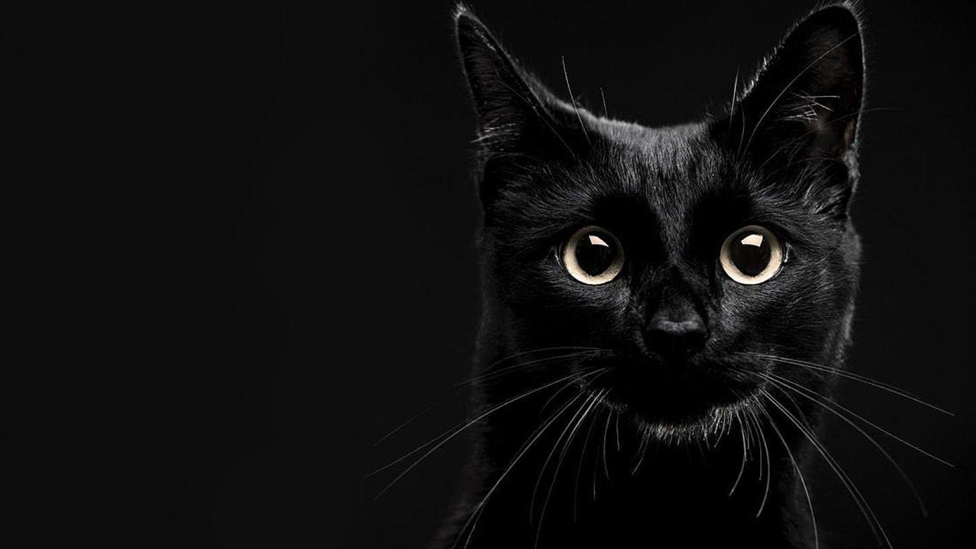 lucky black cat wallpaper   79419   HQ Desktop Wallpapers 1920x1080