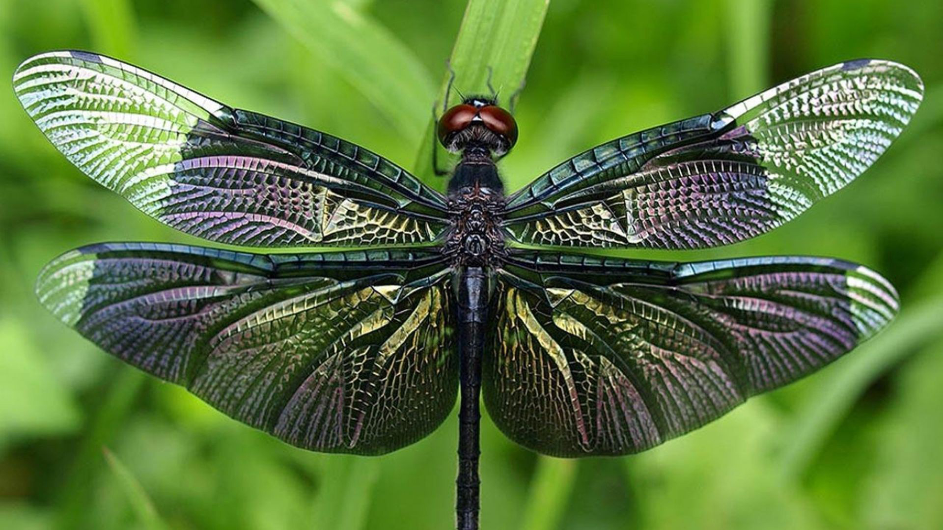 Dragonfly Computer Wallpapers Desktop Backgrounds 1920x1079