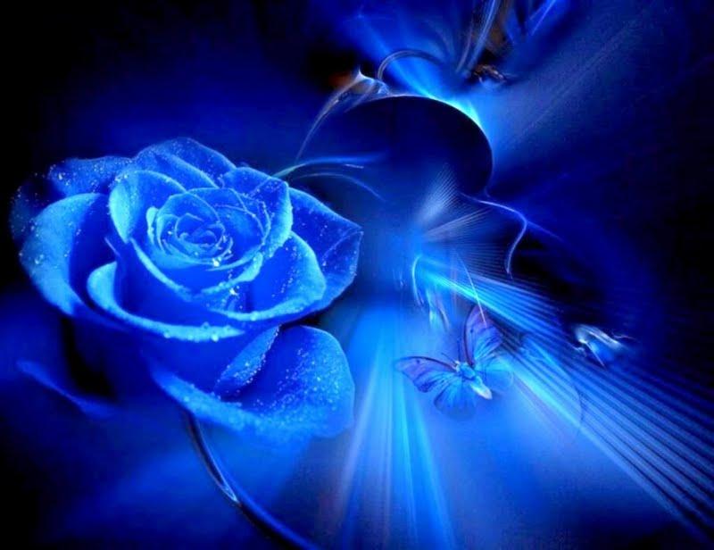 Butterflies and roses wallpaper wallpapersafari - Blue rose hd wallpaper download ...