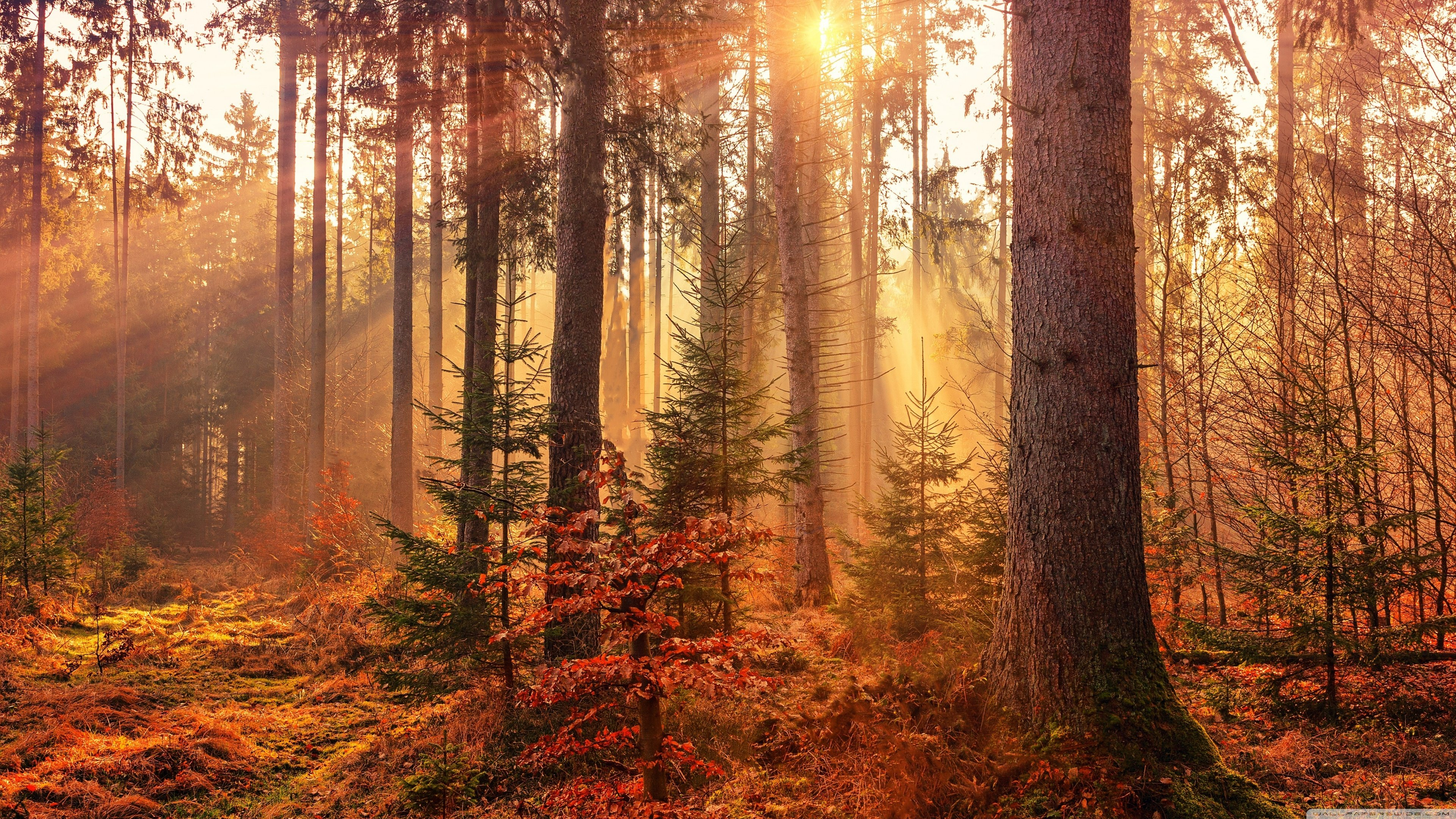 Free Download Autumn Forest Path 4k Hd Desktop Wallpaper For 4k Ultra Hd Tv 3840x2160 For Your Desktop Mobile Tablet Explore 55 Wallpaper Path Wallpaper Path Forest Path Wallpaper