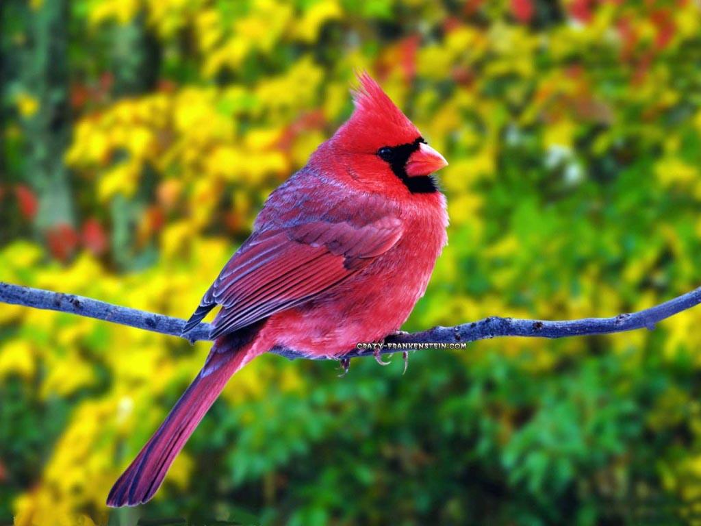 Animals Zoo Park 7 Beautiful Birds Wallpapers for Beautiful Desktop 1024x768