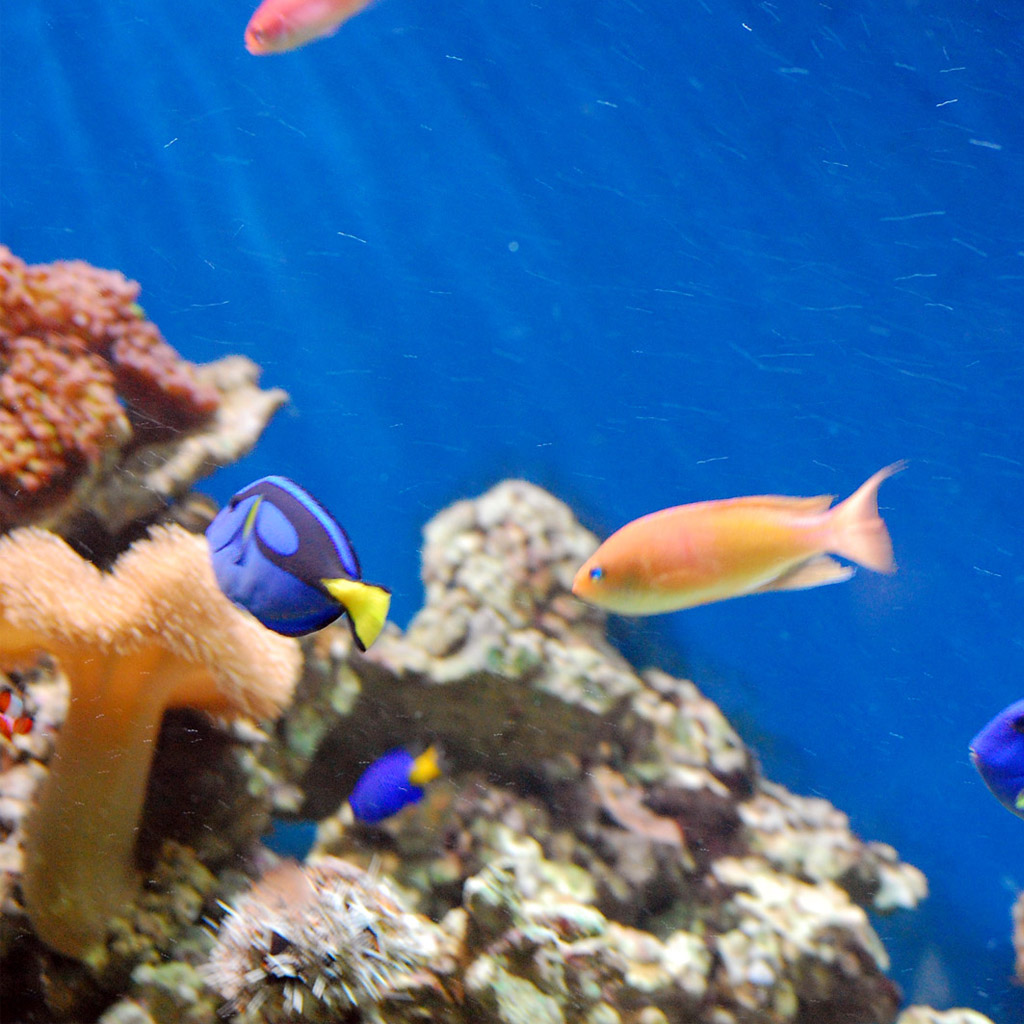 Coral Reef Background: Coral Reef Wallpaper