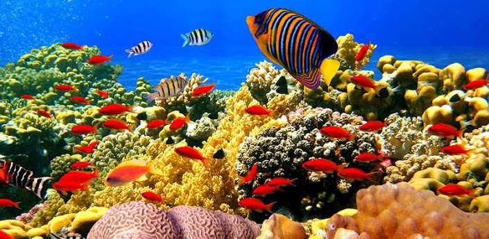 Live Fish Wallpaper for Windows 705x345