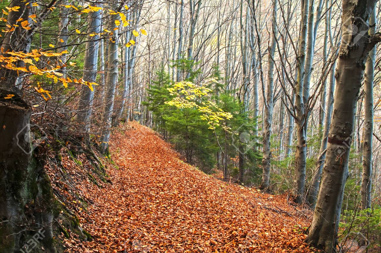 Autumn Mountain Forest Trail As Natural Background Stock Photo 1300x863
