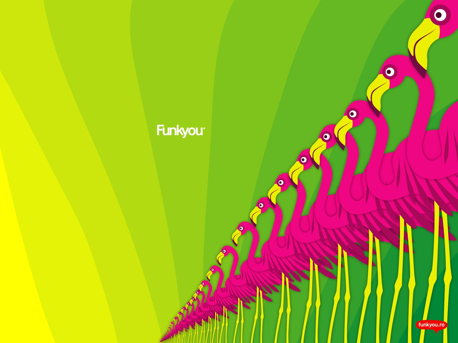 Funk Flamingo wallpapers Funk Flamingo stock photos 1600x1200