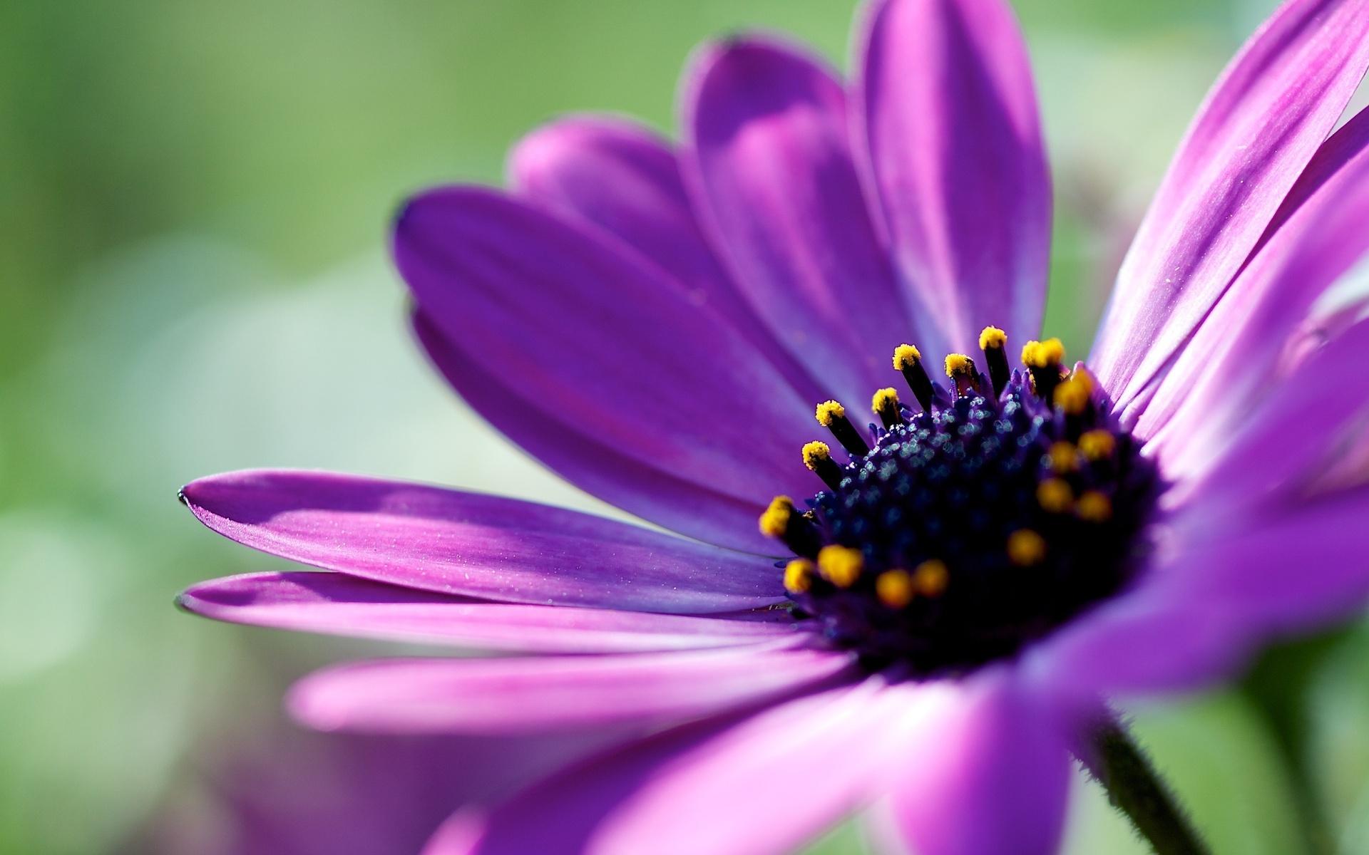 Funny Purple Flowers Hd Wallpaper: Purple Flower Wallpapers HD
