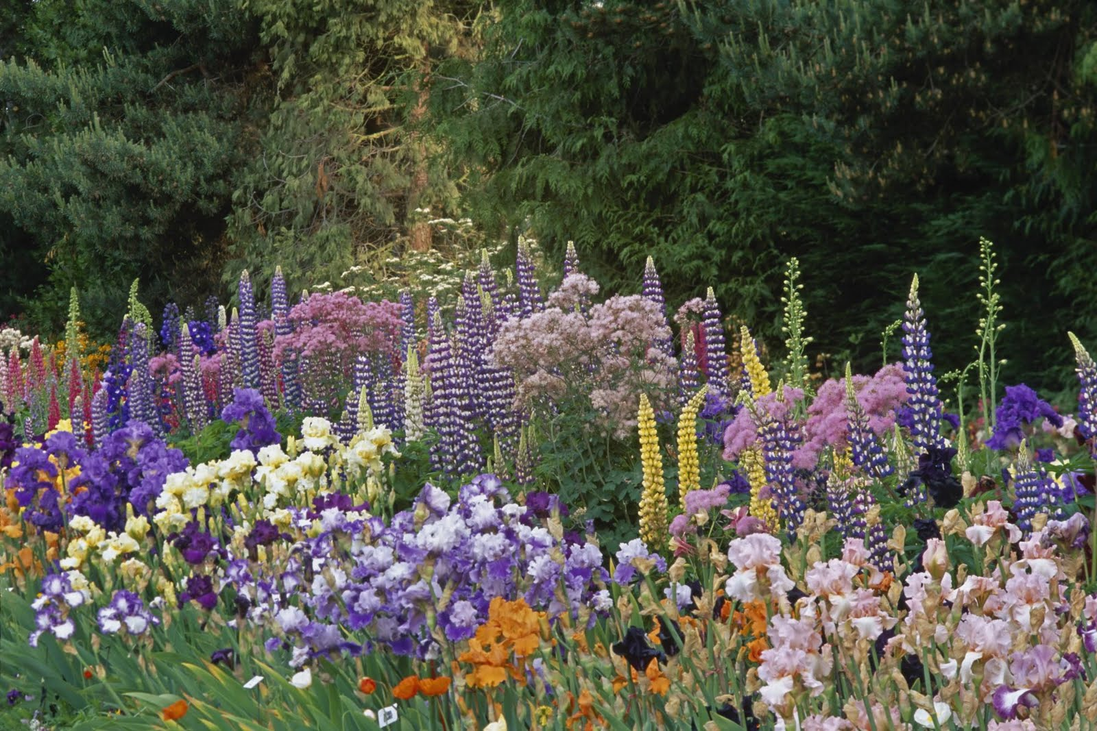 Wonderful flower garden cool wallpapers 1600x1067