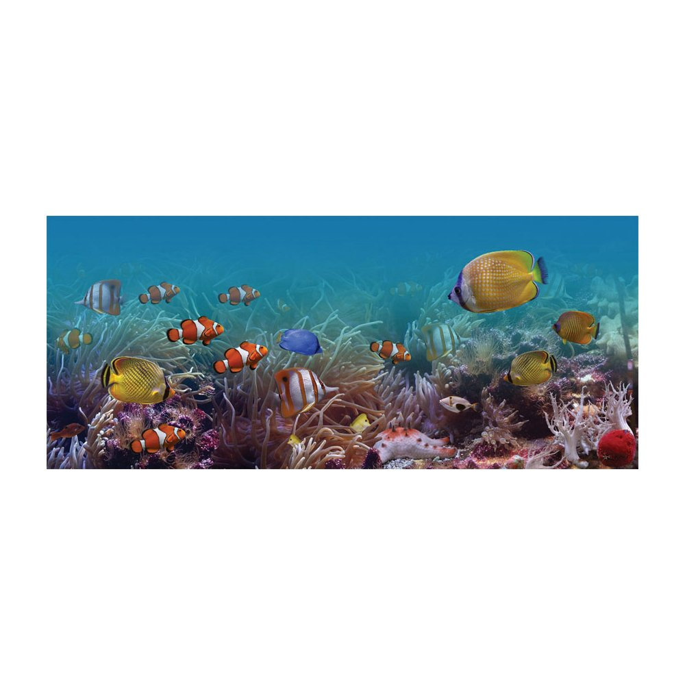 Finding Fishies Underwater Removable Wallpaper Mural Lowes Canada 1000x1000