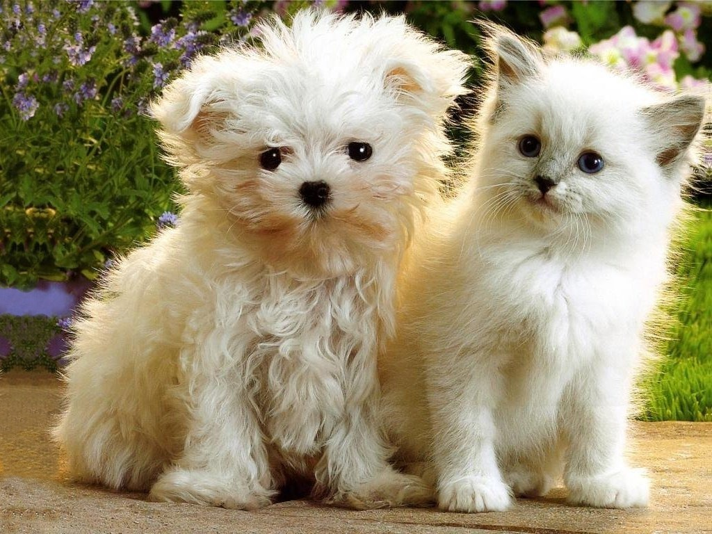 Kittens And Puppies Wallpaper Desktop Wallpapersafari