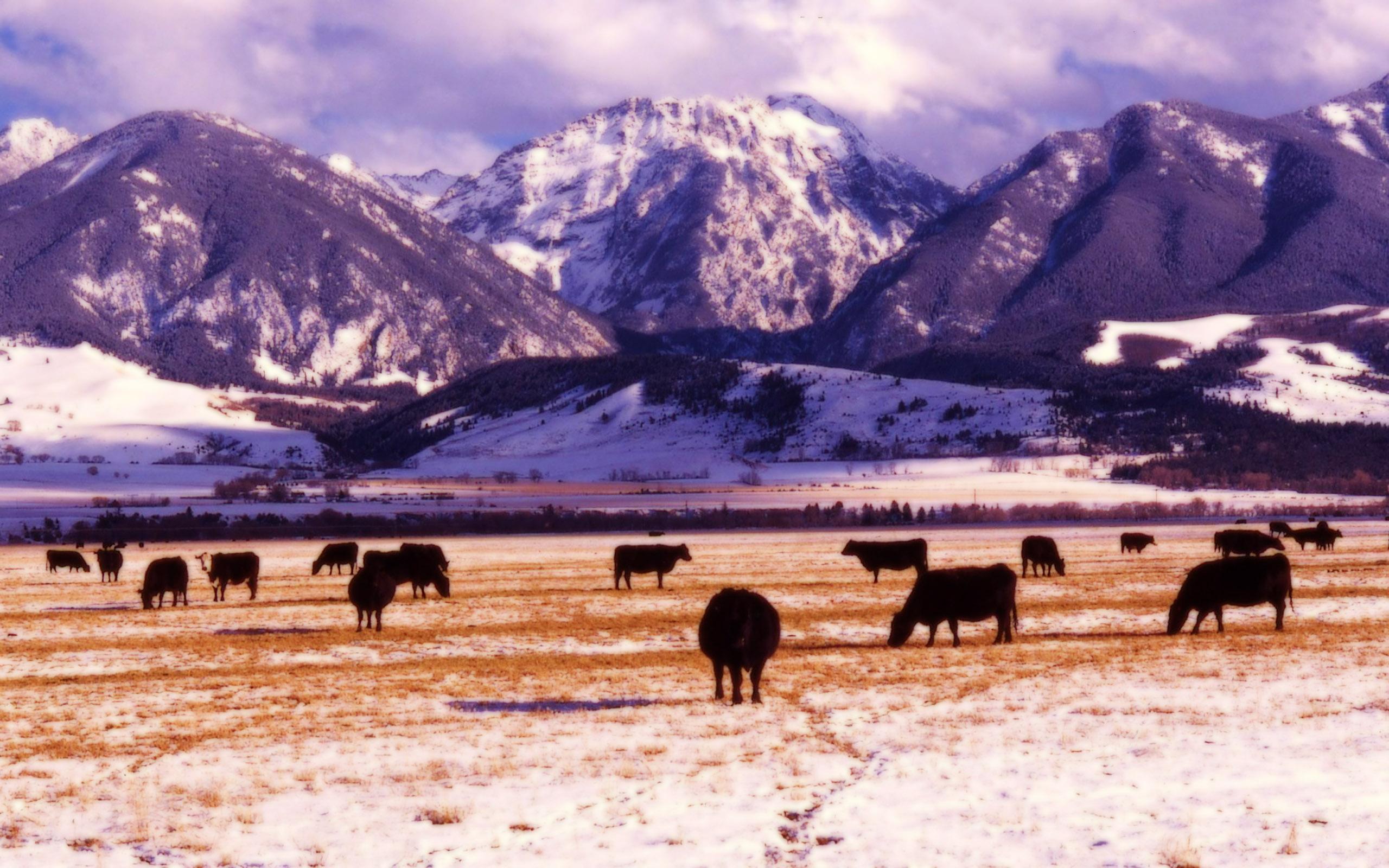 Montana Wallpapers 2560x1600