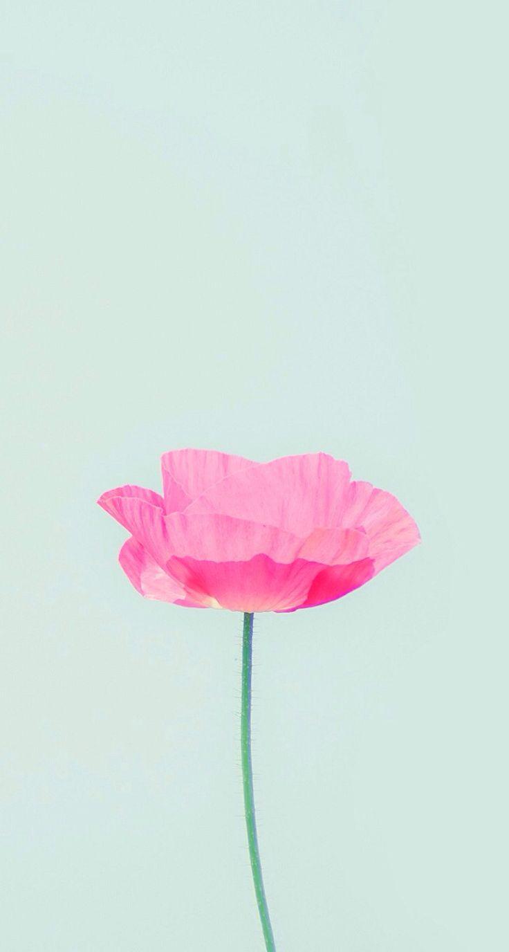 Source httpwwwfavpicsnetiphone 5 wallpaper cute pinterest 736x1376