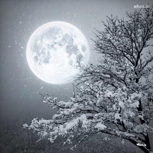 Full White Christmas Tree