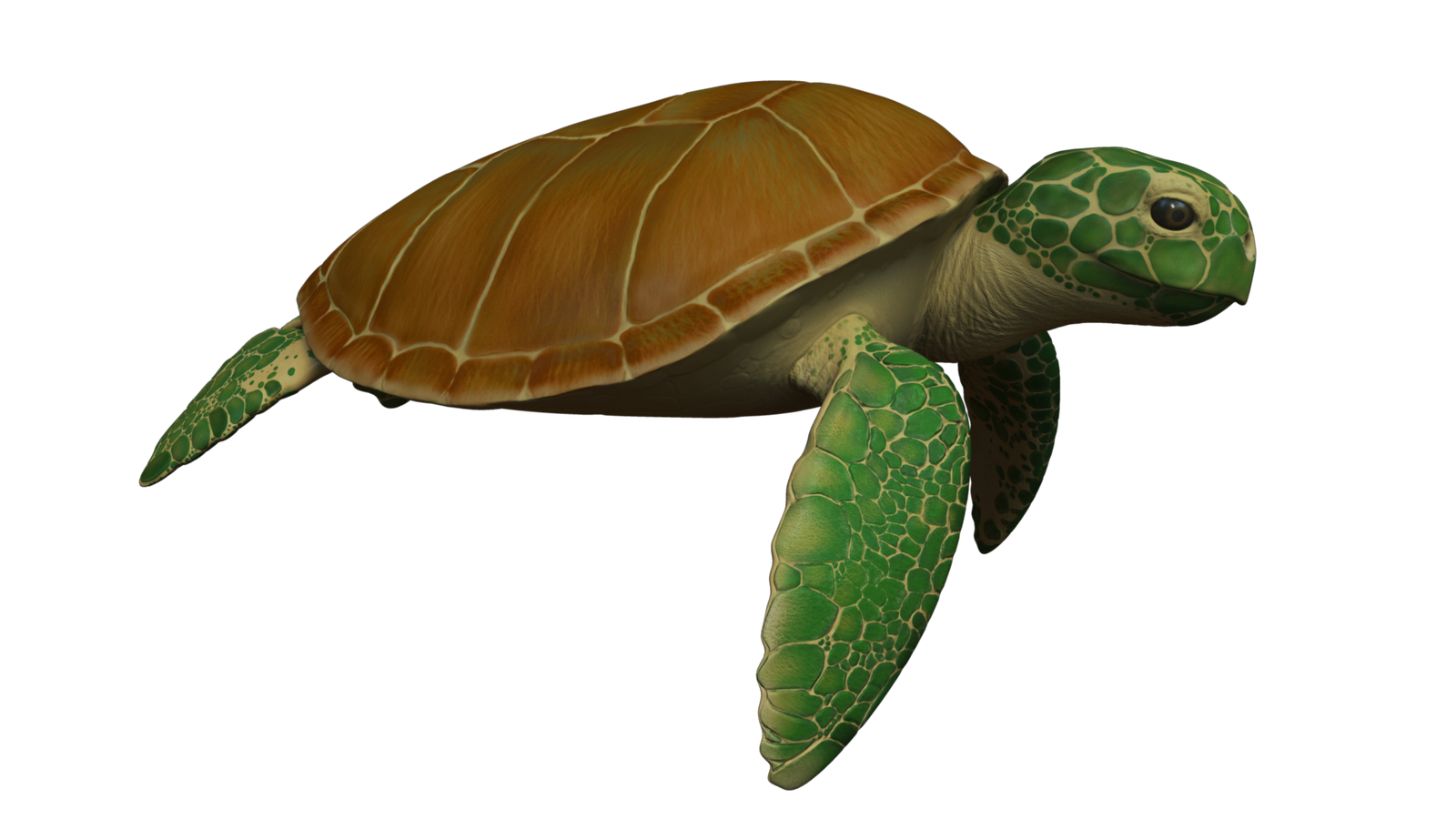 animated sea turtle wallpaper iphone wallpapersafari nemo clipart transparent nemo clipart free