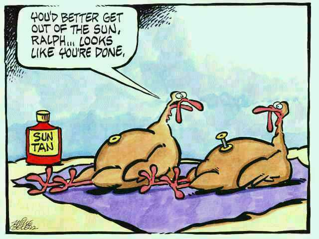 funny thanksgiving wallpapers funny thanksgiving wallpapers funny 640x480