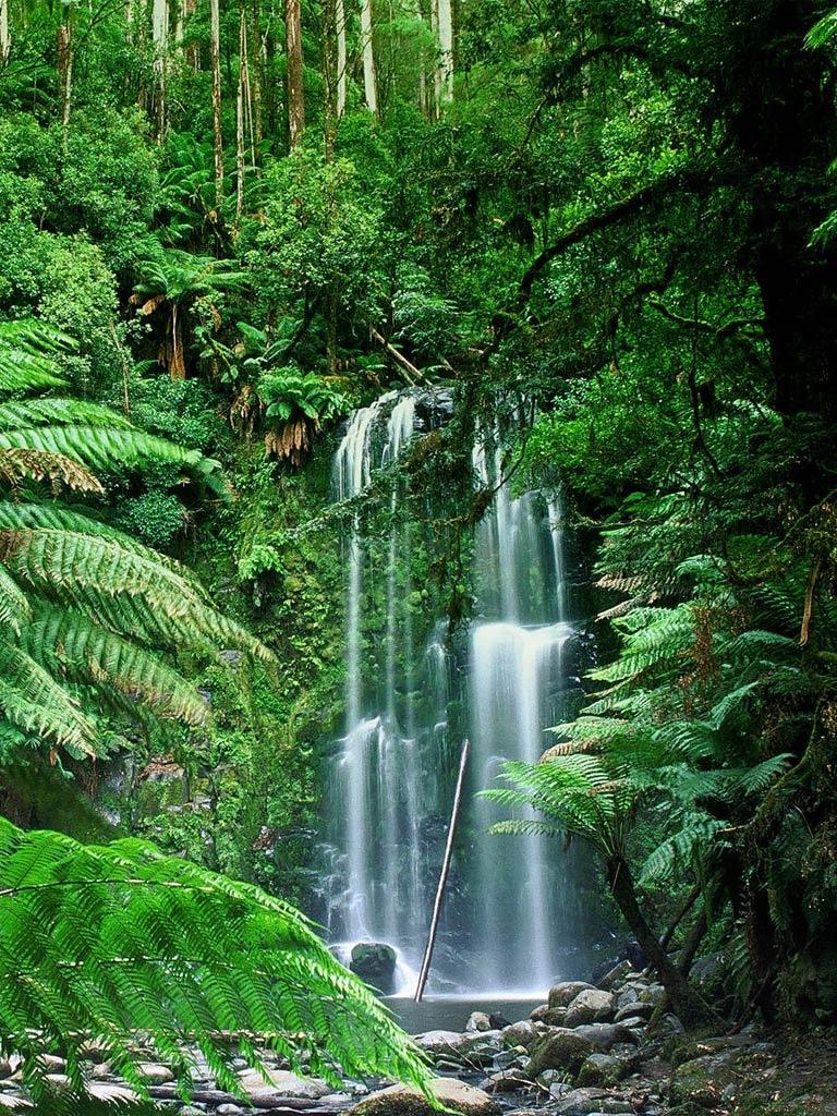 Beauchamp Falls Victoria Australia   iPad iPhone HD Wallpaper 768x1024