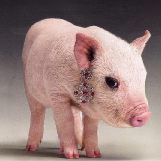 Baby Pigs Wallpapers - WallpaperSafari