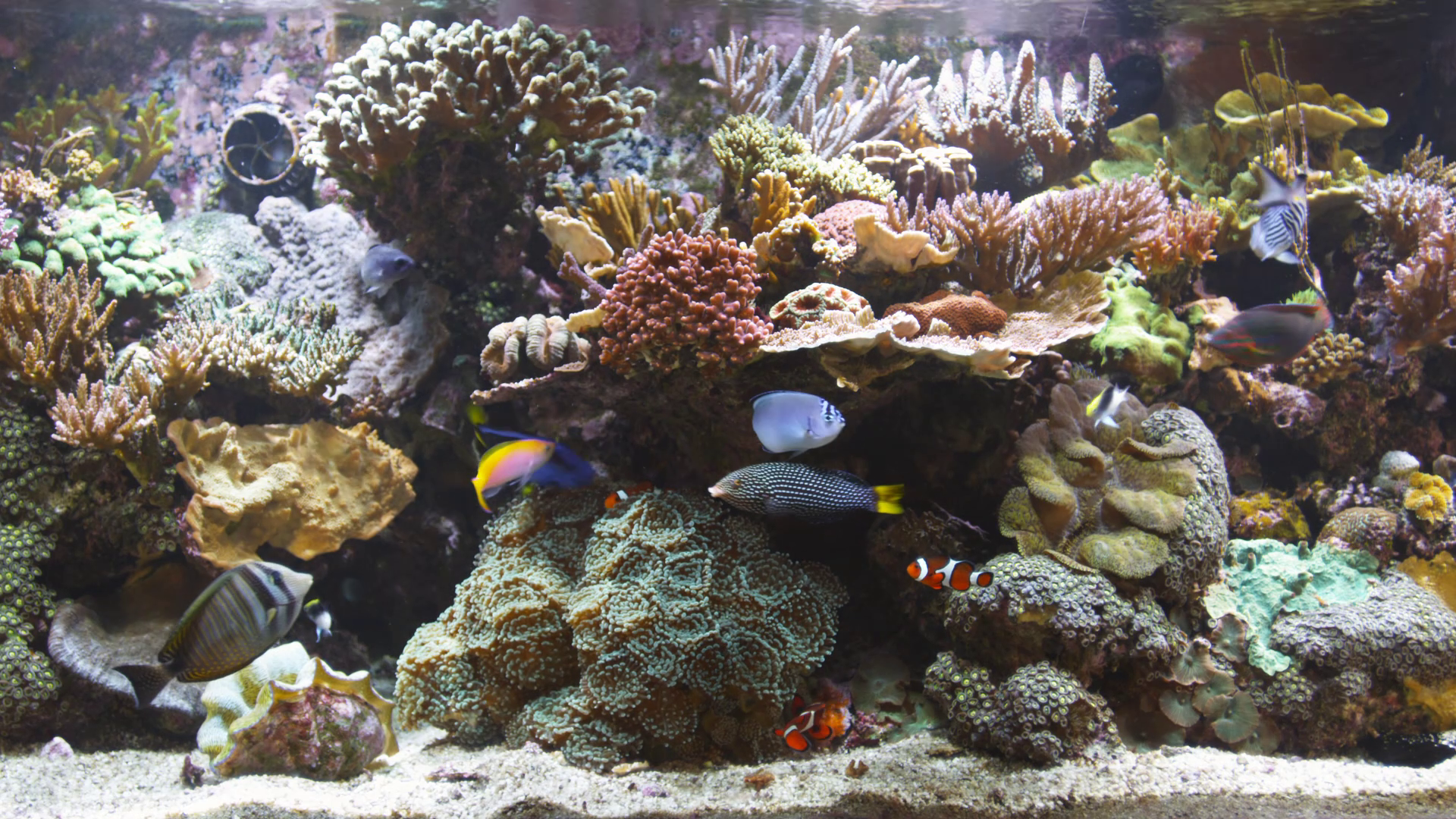 Aquarium screensaver fish tank 1080p hd - Bluscenes Coral Reef Aquarium Wallpaper 137696