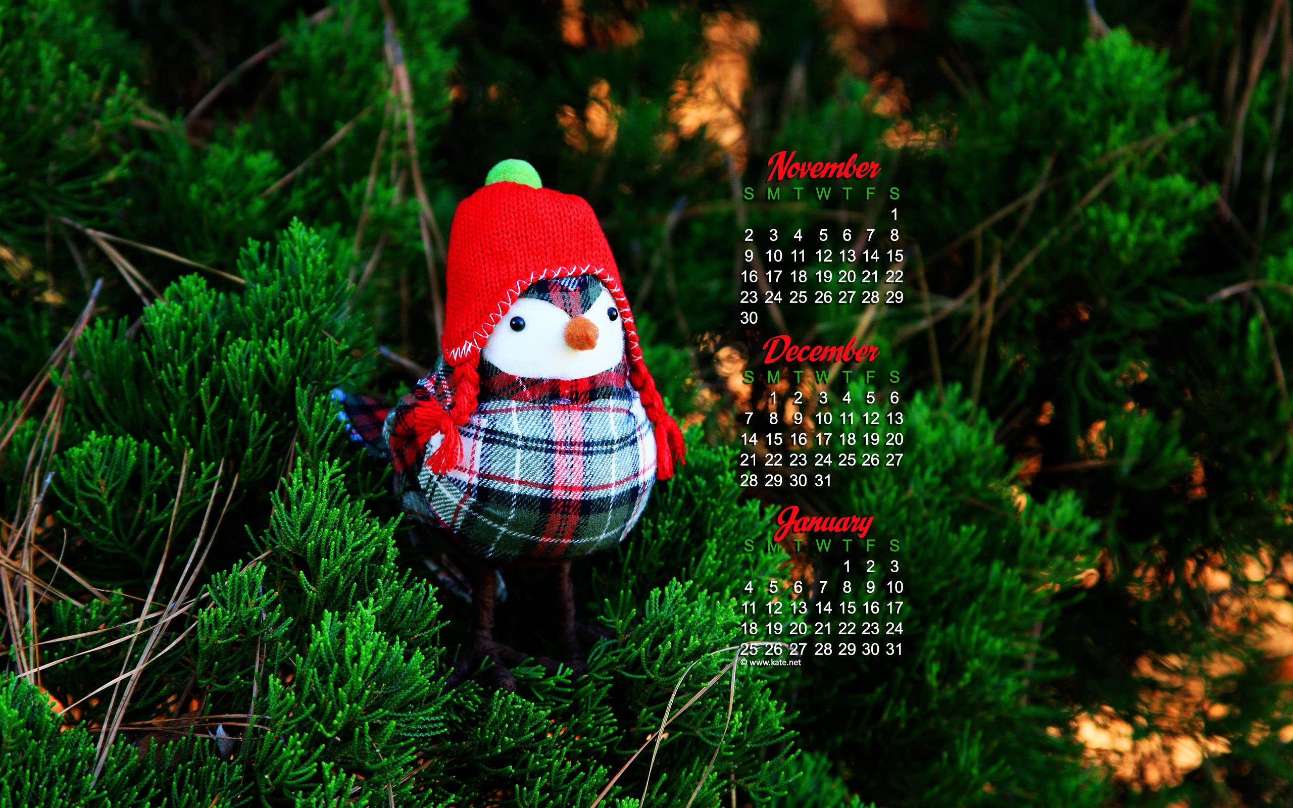 december calendar wallpaper bundled up bird photo wallpaper kate net 2560x1600