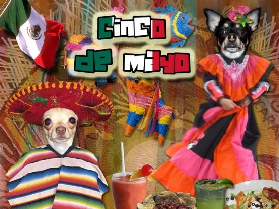 Cinco de Mayo Wallpapers HD Download 550x413