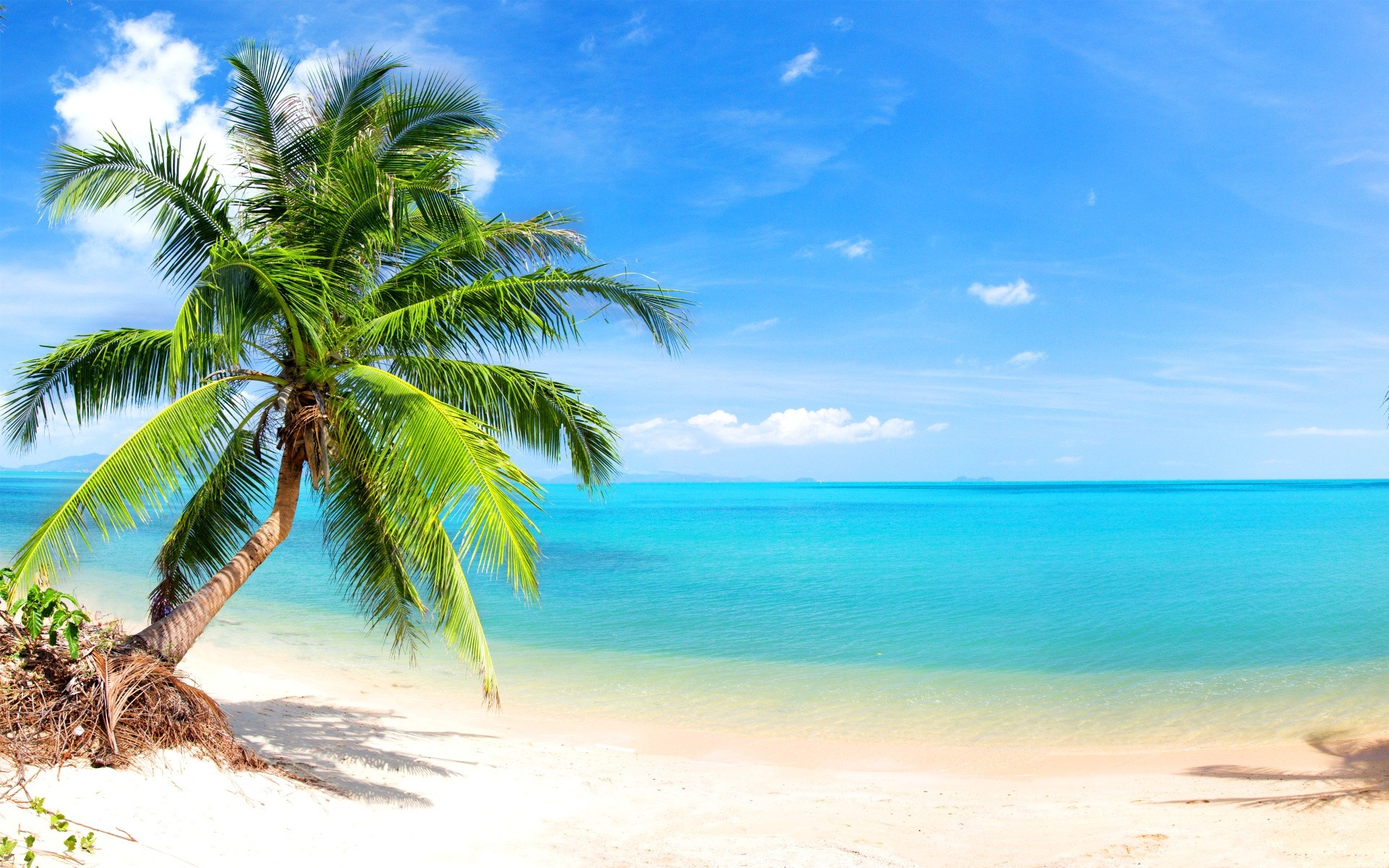 Free download Palm Tree on Tropical Beach Full HD ...