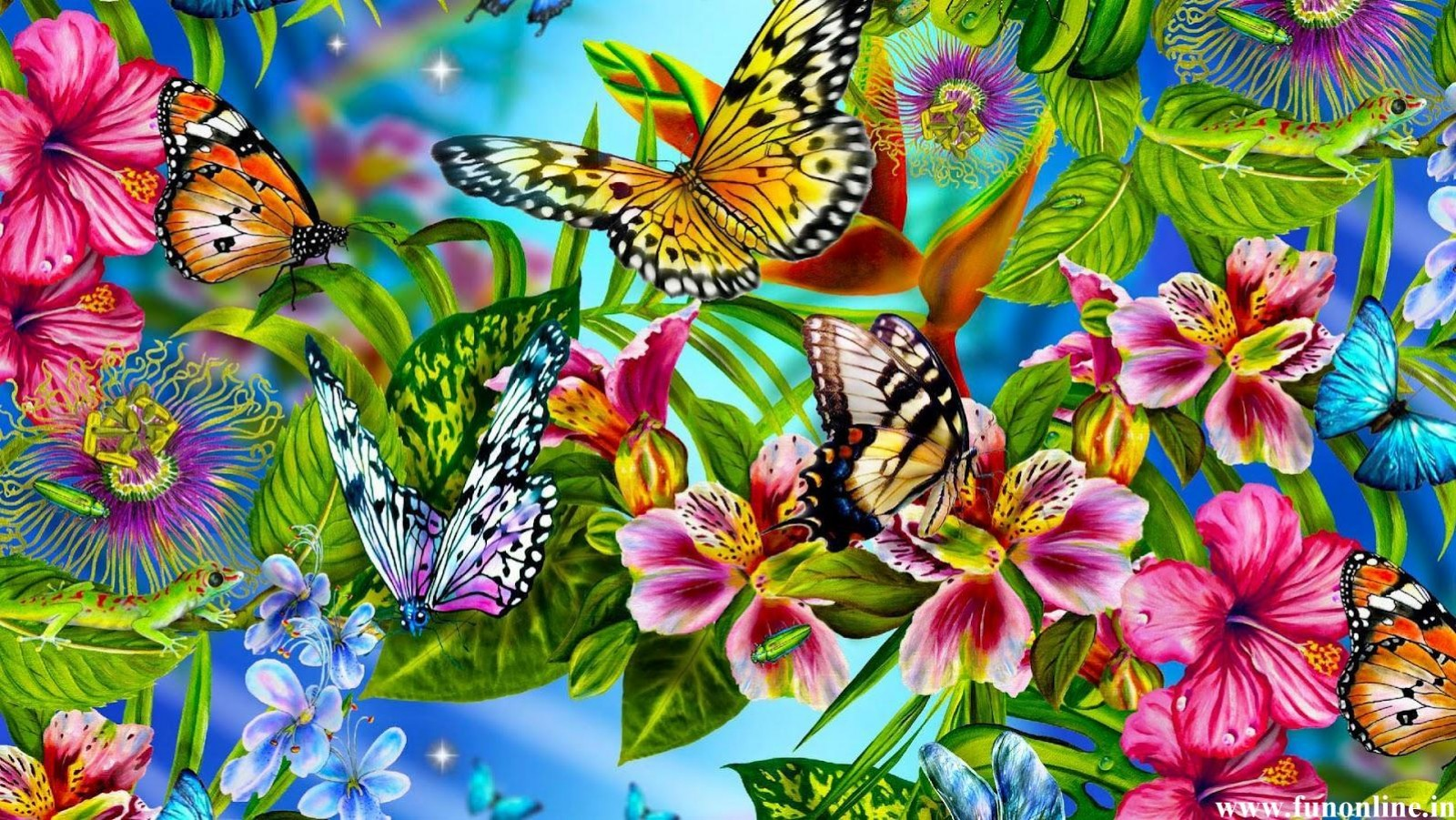 Colorful butterfly backgrounds   SF Wallpaper 1600x901