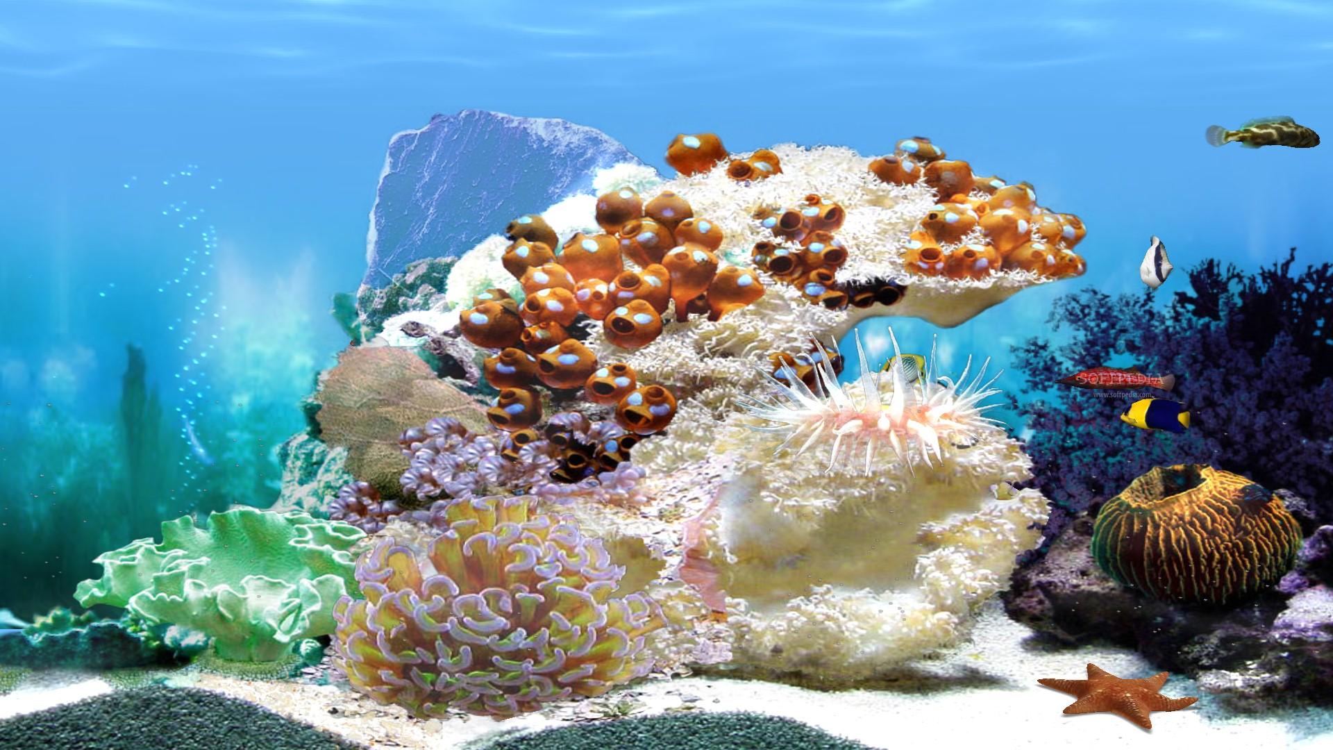 Fish aquarium screensaver -  Amazing 3d Aquarium Animated Screensaver And