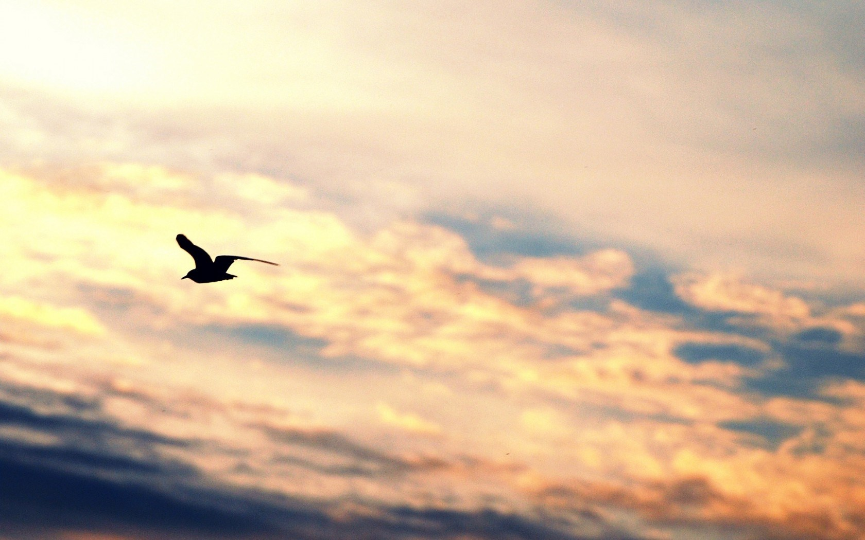 bird flying silhouette gull freedom sky hd wallpaper   Magic4Wallscom 1680x1050