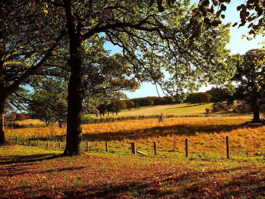 oak tree wallpaper background   HD Desktop Wallpapers 4k HD 1024x768