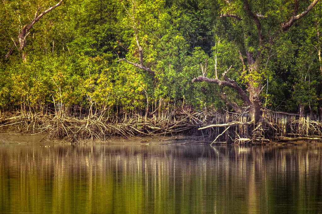 sundarbantours images wild life of sundarban national park HD 1024x683