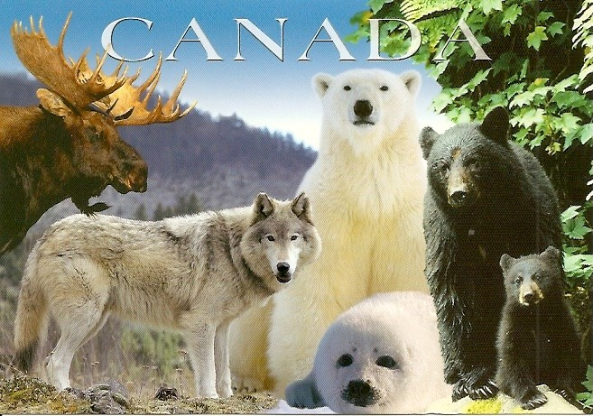 Canada Wildlife HD Walls Find Wallpapers 657x461